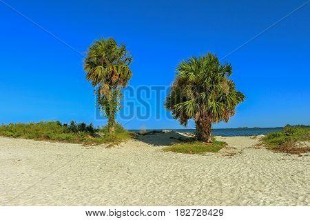Palm trees on Howard Park beach in Tarpon Springs Tampa Florida