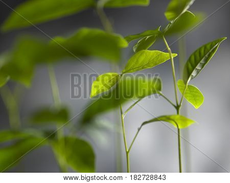 sapling tree on the gray background