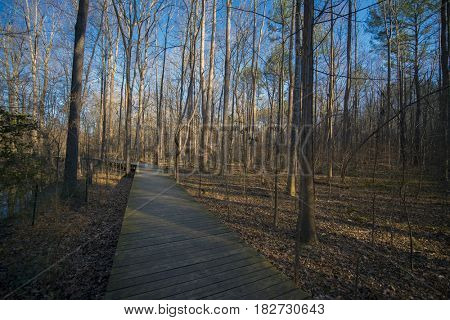 A boardwalk on a running trail during summer