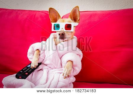 Dog Watching Tv On The Couch