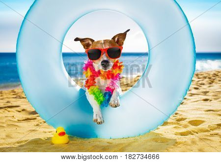 Dog At The Beach And Ocean With Air Mattress