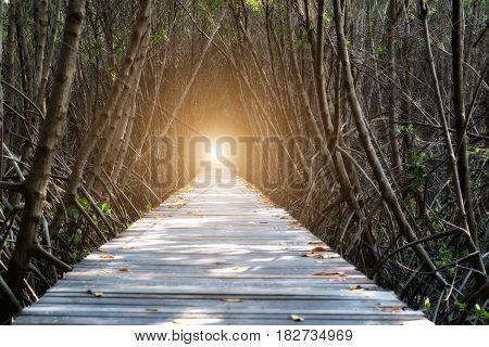 Tree tunnel Wooden Bridge In Mangrove Forest at Laem Phak Bia Phetchaburi Thailand