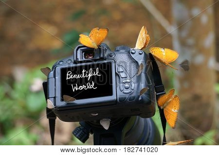 Camera and Butterfly in nature. Beautiful world on Screen