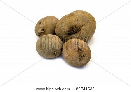 Germinated potatoes, pictures of seed potatoes, potatoes ready to plant