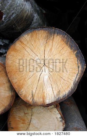 Log End 1