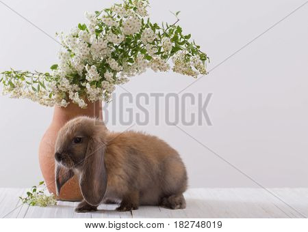 the rabbit with flowers on white background