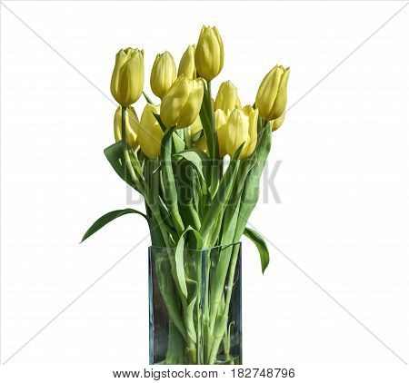 Spring bouquet of yellow tulips isolated on the white background in a bucket version 3