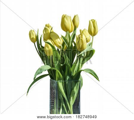 Spring bouquet of yellow tulips isolated on the white background in a bucket version 5
