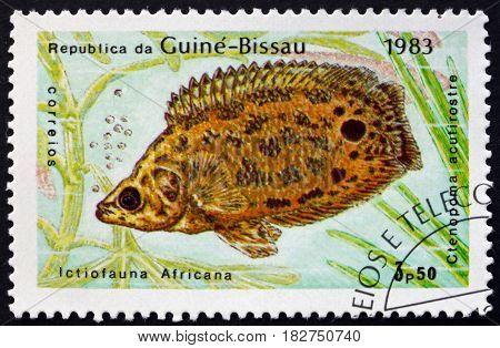 GUINEA-BISSAU - CIRCA 1983: a stamp printed in Guinea-Bissau shows Leopard Bush Fish Ctenopoma Acutirostre Freshwater Fish circa 1983
