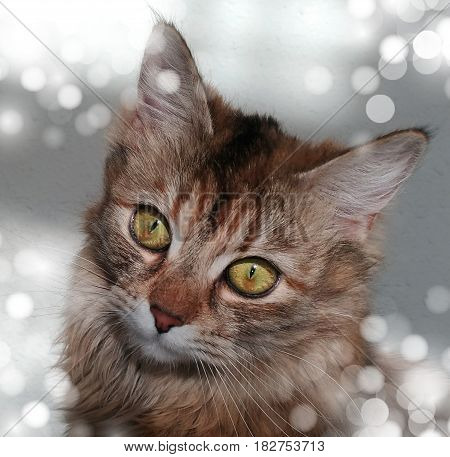 Portrait of grey kitten with big green eyes on the white blurred background. Home cat. Square photo. Macro shot