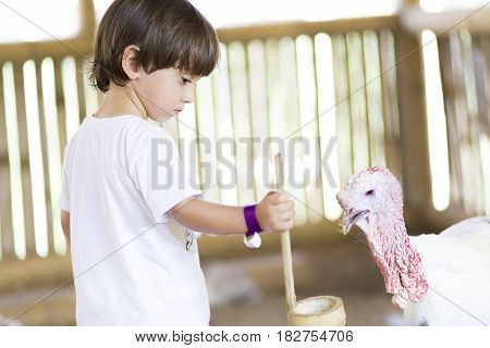 Little Boy feeds Turkey at the Zoo