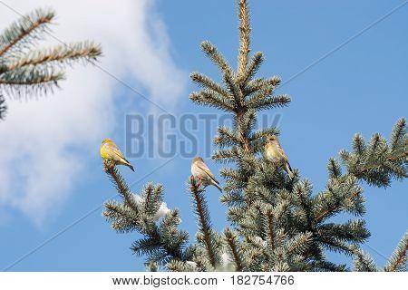 Birds On Christmas Tree