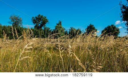 Grass on the meadow at noon. Panorama. Ukraine. Europe.