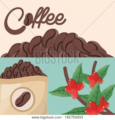 coffee beans tree sac fresh vector illustration eps 10