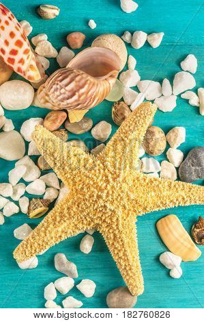 An overhead photo of a sea star, sea shells, and pebbles on a vibrant turquoise background