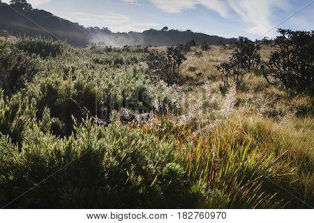 Typical environment of Horton Plains National Park, Central highlands, Sri Lanka.
