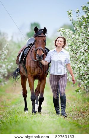 Woman and bay horse in apple garden. Horse and beautiful lady walking outdoor. Horse rider. Equestrian sport.