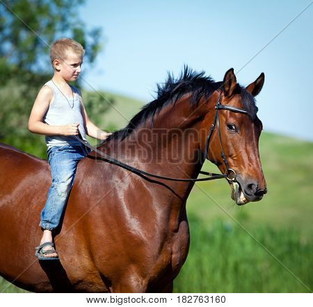 Child riding a big bay horse in field. Boy with horse outdoors. Horseback in summertime.
