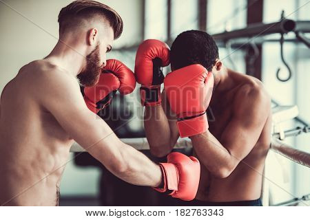 Handsome Young Boxers