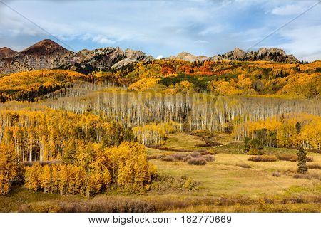 Autumn is in full swing on Kebler Pass near Crested Butte Colorado.
