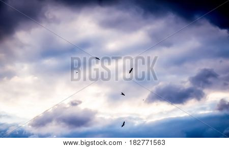 Cloudscape of Birds in the Sky in the Clouds Flying
