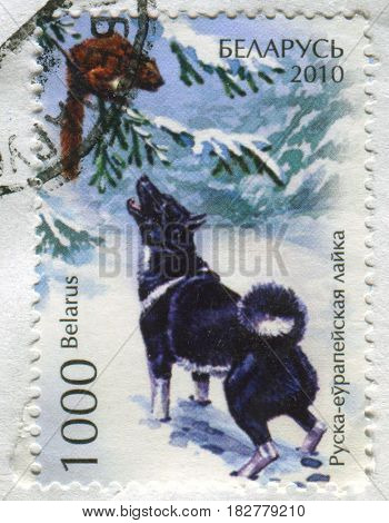 GOMEL, BELARUS, APRIL 21, 2017. Stamp printed in Belarus shows image of  The Russian-European Laika, circa 2010.
