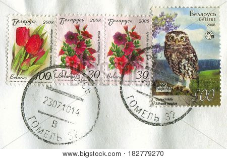 GOMEL, BELARUS, APRIL 21, 2017. Stamp printed in Belarus shows image of  The Tulipa gesneriana, Petunia hybrida and Athene noctua, circa 2008.