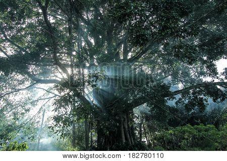 Mysterious tree on the lakeside Danau Toba in Indonesia