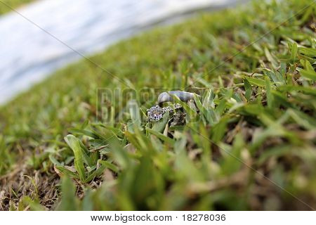 Rings in Grass