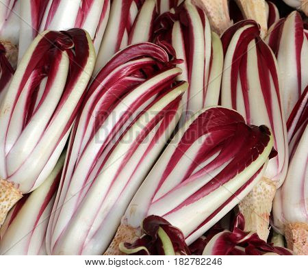 Background Of Red Radicchio In Winter