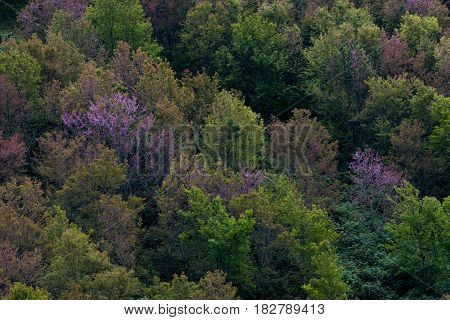 Deciduous Forest, Seasonal Change Temperate Forest Concept.