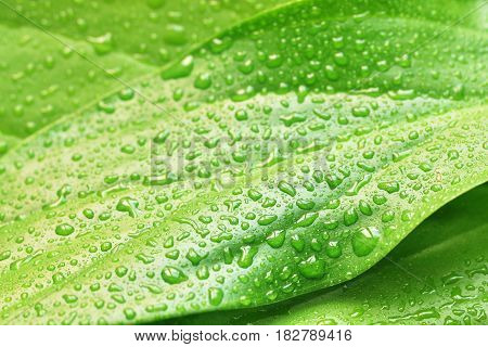 green plant leaf after rain with water drops nature background