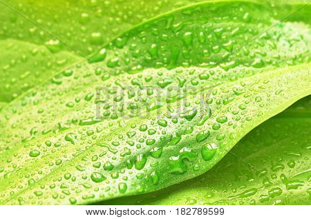 green plant leaf with water drops after rain, nature background