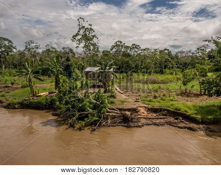 Fallen Tree On The Bank Of Amazon River