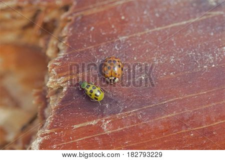 Two small insects on a piece of wood