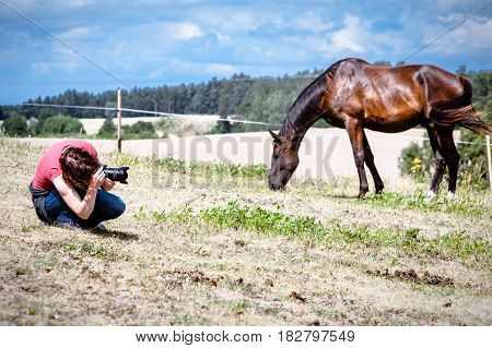 Man taking photo of brown wild horse on meadow idyllic field. Capturing agricultural mammals animals in natural environment.