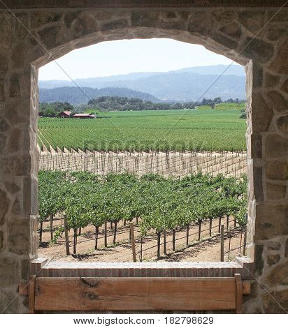 Open window overlooking beautiful vineyard with new and old grape plants