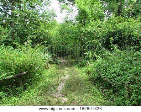 A  Dirt  Grassy  Path  through  the  bushes.