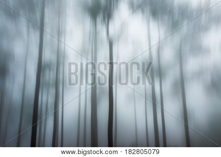 Abstract Pine