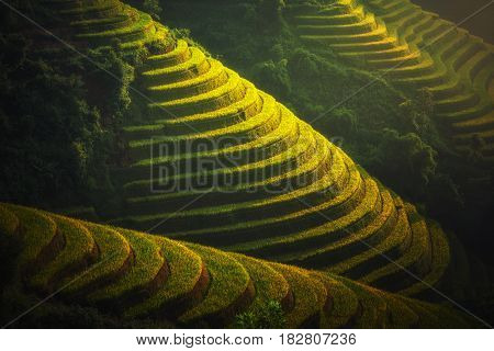 Rice fields on terraced of Mu Cang Chai YenBai Vietnam. Rice fields prepare the harvest at Northwest Vietnam. Vietnam landscapes.