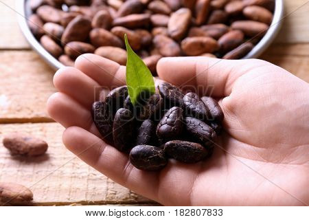 Female hand holding aromatic cocoa beans, closeup