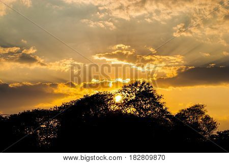 Silhouette of Trees with Sky and Cloud on Sunset
