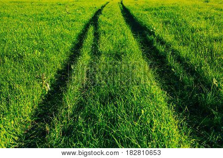 Summer field with fresh green grass and deep car track