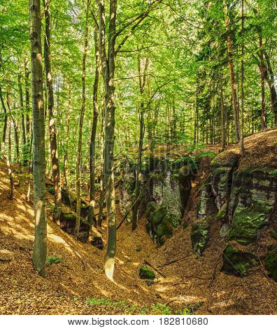 Wild forest with tall trees in mountains in Czech