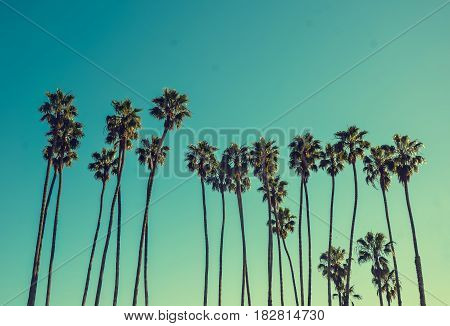 California high palm trees on the blue sky background vintage toned and stylized retro style Santa Barbara