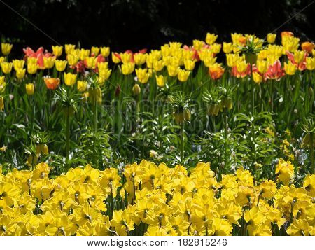 tulips and other flowers in a dutch garden