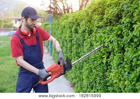 Professional Gardner Dressed With Safety Overalls Using An Hedge Trimmer