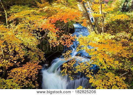 Authumn Waterfall With Colorful Maple Leaf