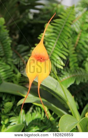 Vertical image of pretty yellow flower in tropical garden of flora and fern
