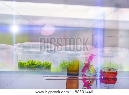 Plant tissue culture in the laboratory .